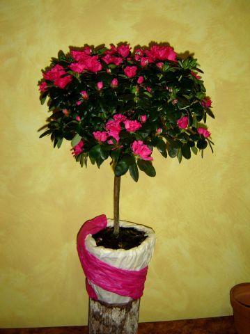 Pousse pousse for Plante verte haute exterieur