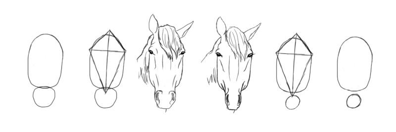 Dessin dessiner le cheval en d tail - Comment dessiner un cerf ...
