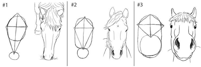 Dessin dessiner le cheval en d tail - Tete de cheval dessin ...