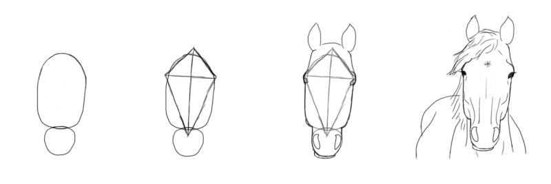 Dessin dessiner le cheval en d tail - Cheval facile a dessiner ...