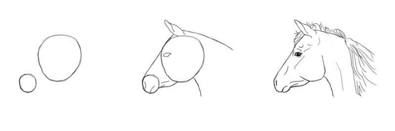 Dessin dessiner le cheval en d tail for Dessin facile a refaire