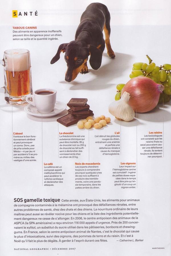 Très Aliments toxiques pour les chiens - Page 2 HY32