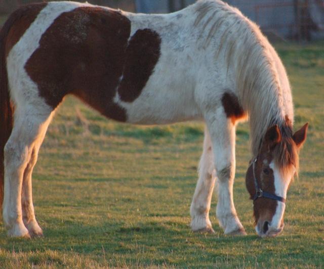 cheval11 dans MWA, ma FamiLle, Mes aMiS