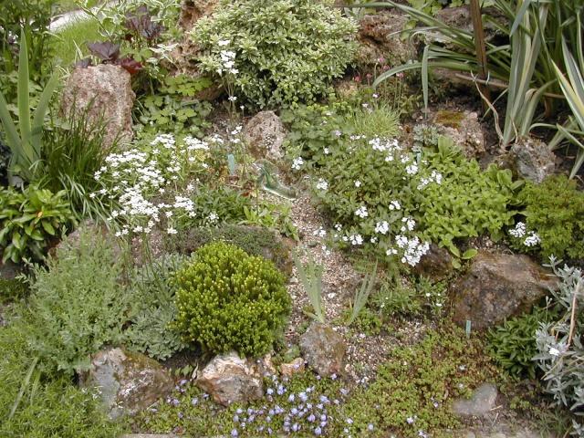 plantes vivaces couvre sol au jardin d 39 ornement page 7. Black Bedroom Furniture Sets. Home Design Ideas