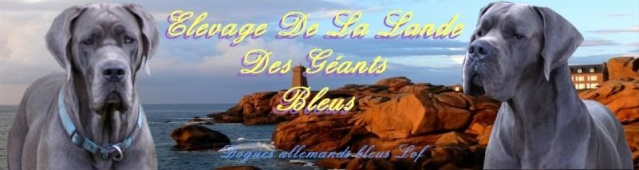 Elevage de la Lande des Géants Bleus