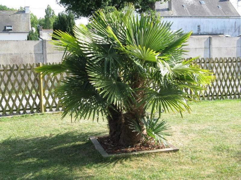 le forum des fous de palmiers 44 de retour pour de nouvelles photos de notre jardin. Black Bedroom Furniture Sets. Home Design Ideas