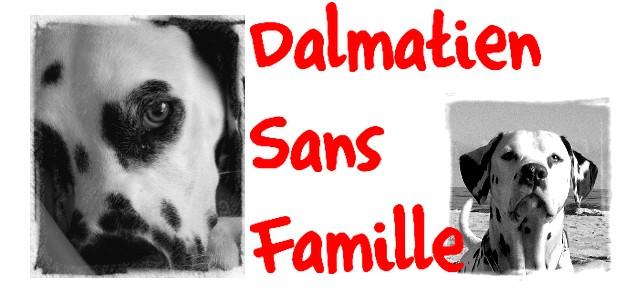 Association Dalmatien Sans Famille