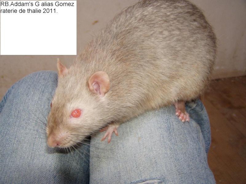 rats_010.jpg