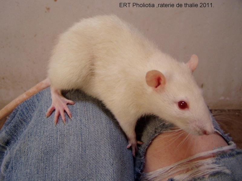 rats_011.jpg