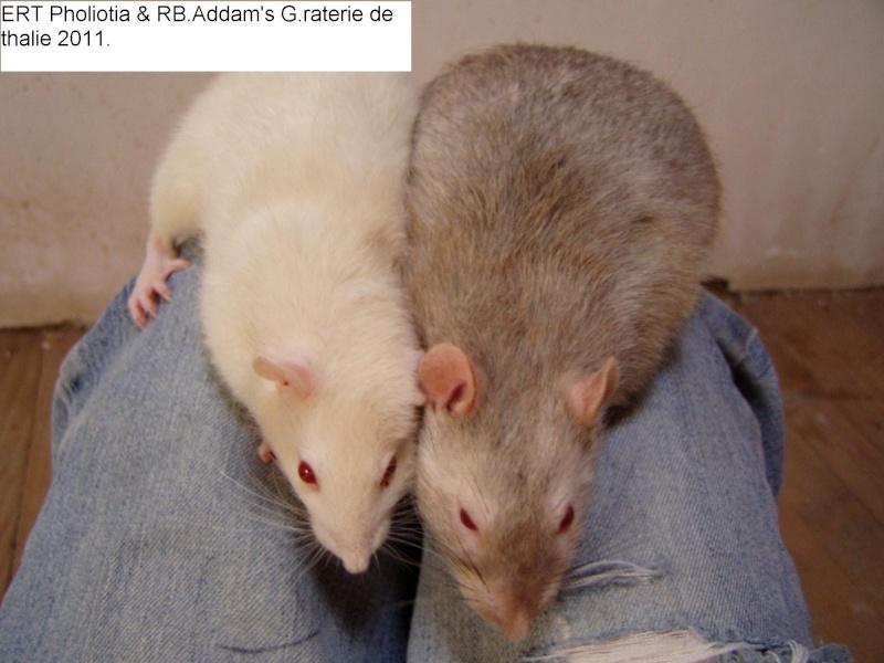rats_012.jpg