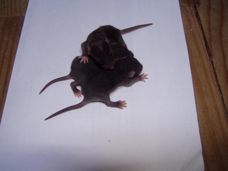rats_122.jpg