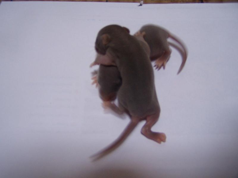 rats_123.jpg