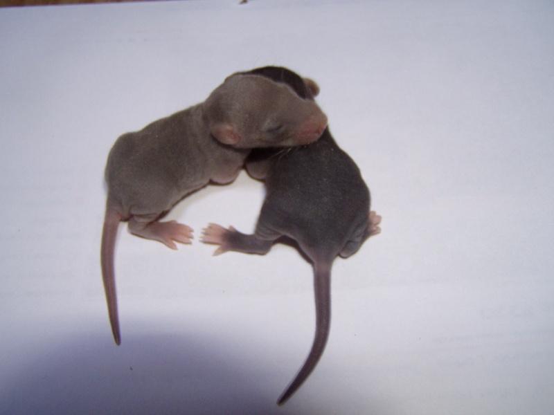 rats_124.jpg