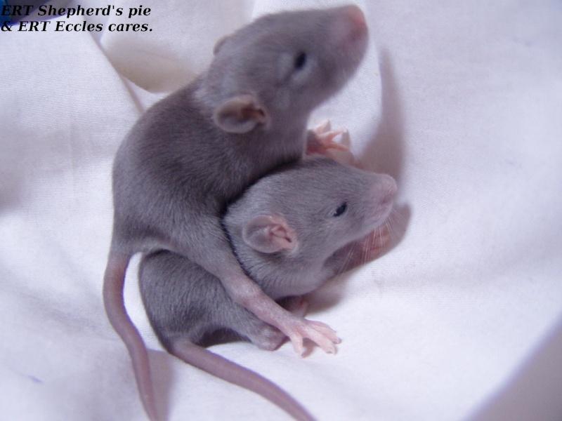 rats_140.jpg