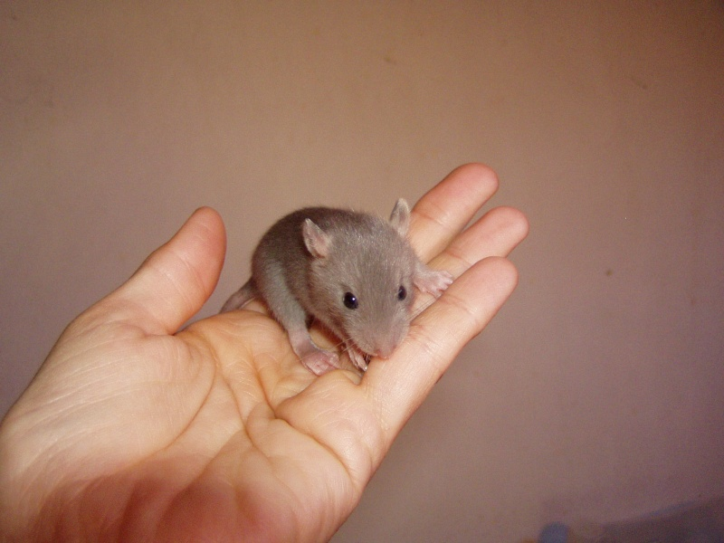 rats_214.jpg
