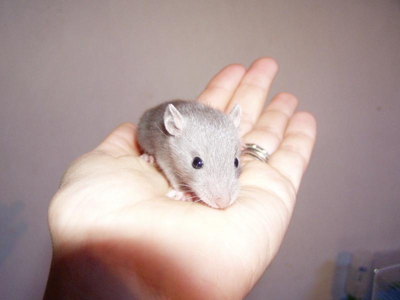 rats_215.jpg
