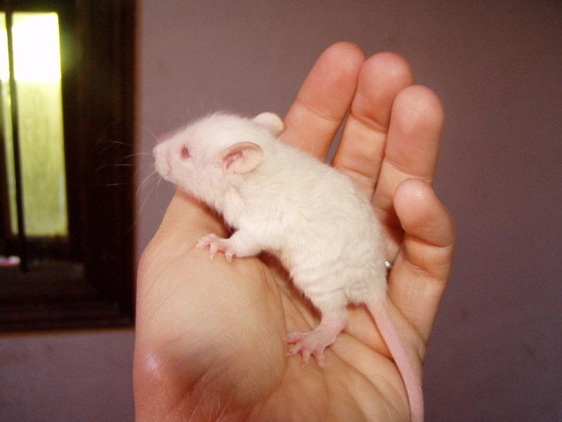 rats_217.jpg