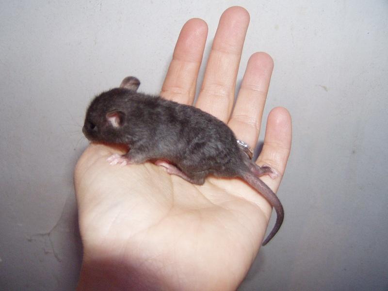 rats_219.jpg