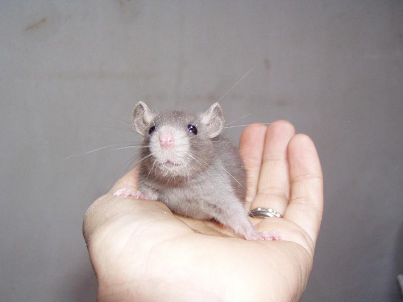 rats_314.jpg