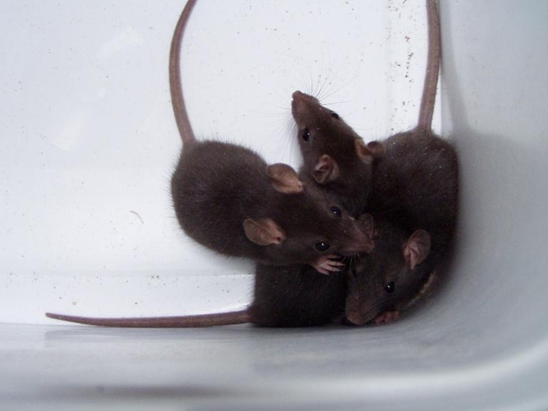 rats_319.jpg