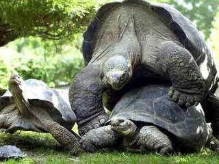 La tartaruga piu 39 grande del mondo for Tartarughe grandi