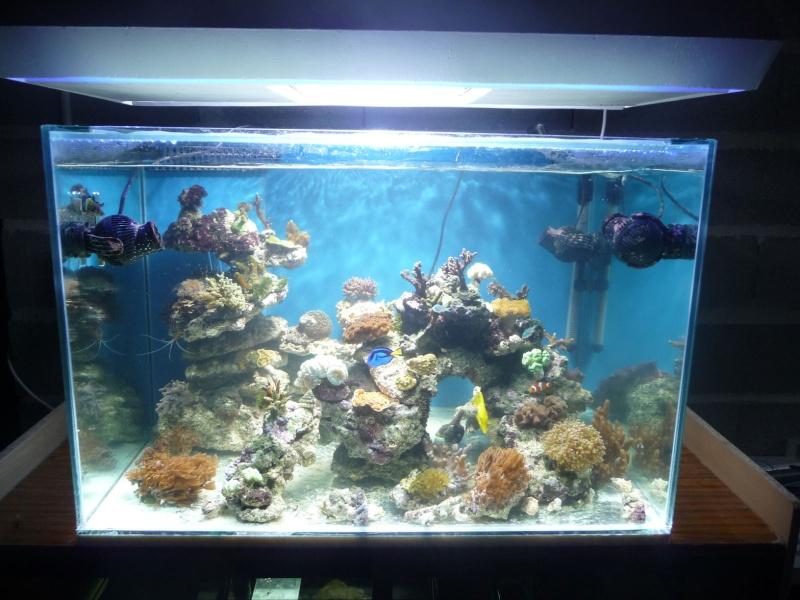 recifal vos photos sans coraux autres sujets r 233 cifaux