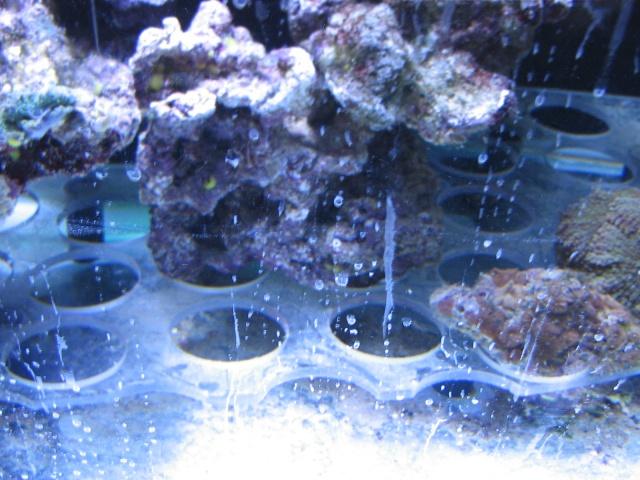 vitre aquarium sale