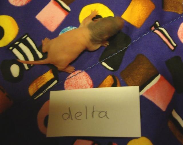 delta_10.jpg