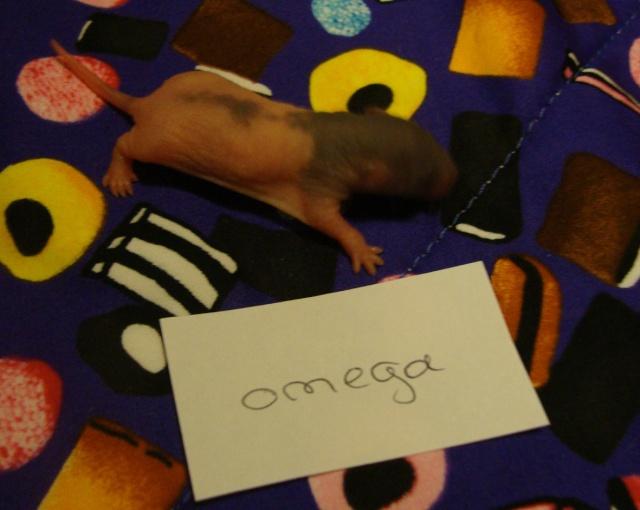 omega_10.jpg
