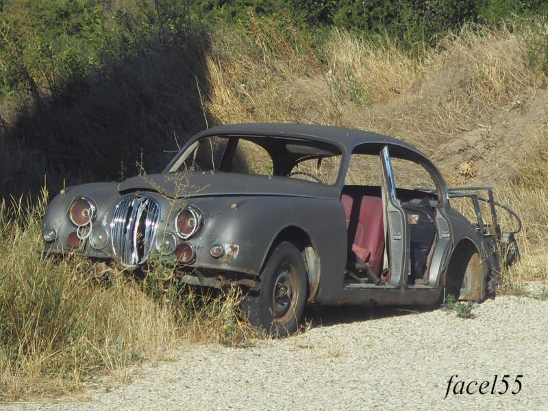 -jagua18.jpg
