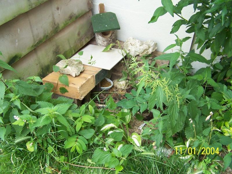 Un b b z 39 h risson dans mon jardin page 1 for Herisson dans mon jardin