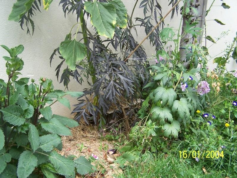 Un b b z 39 h risson dans mon jardin - J ai trouve un herisson dans mon jardin que faire ...