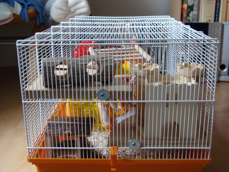autres animaux  re cages aquariums installations page