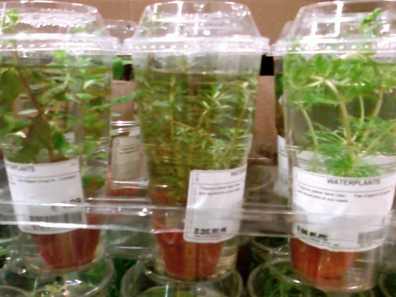 Ressources locales aquario - Ikea plantes d interieur ...