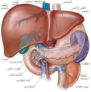 تاريخ زراعة الكبد