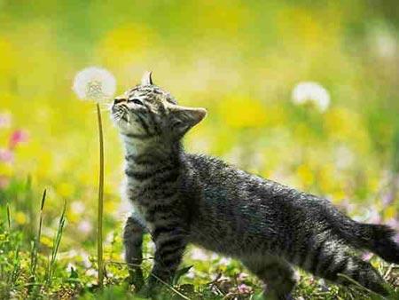 cat-fl10.jpg