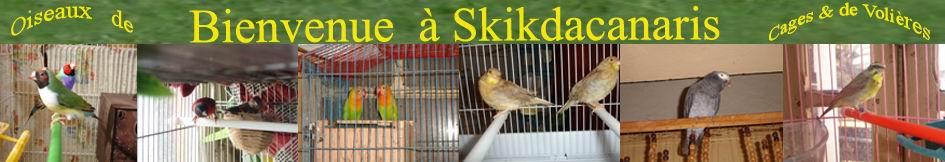 La Canariculture à Skikda