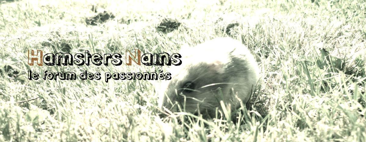 Forum Hamsters Nains