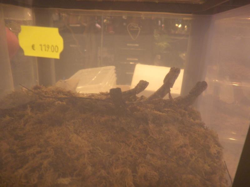 Reptile qui commence par c